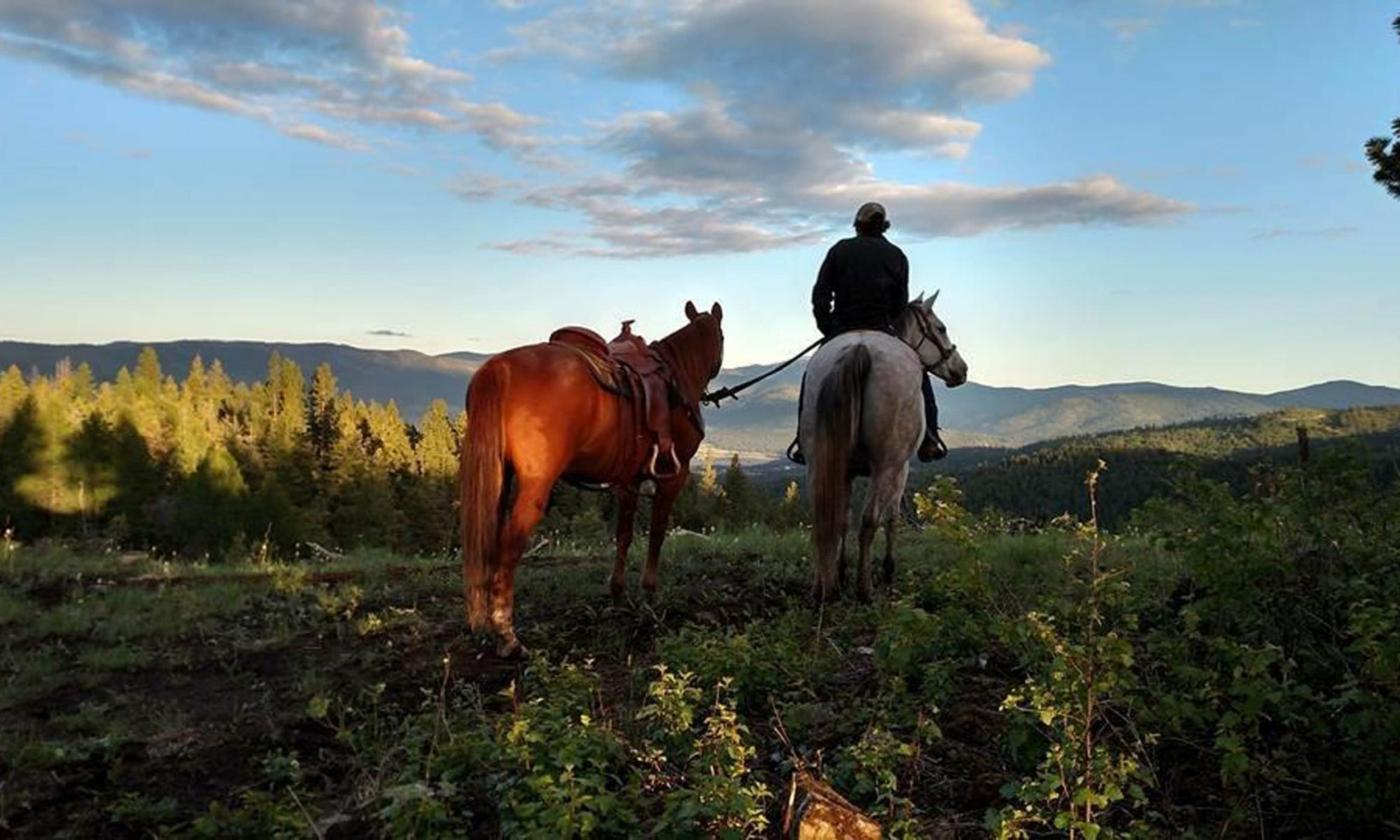 Twisted Pine Ranch, Kyla MT