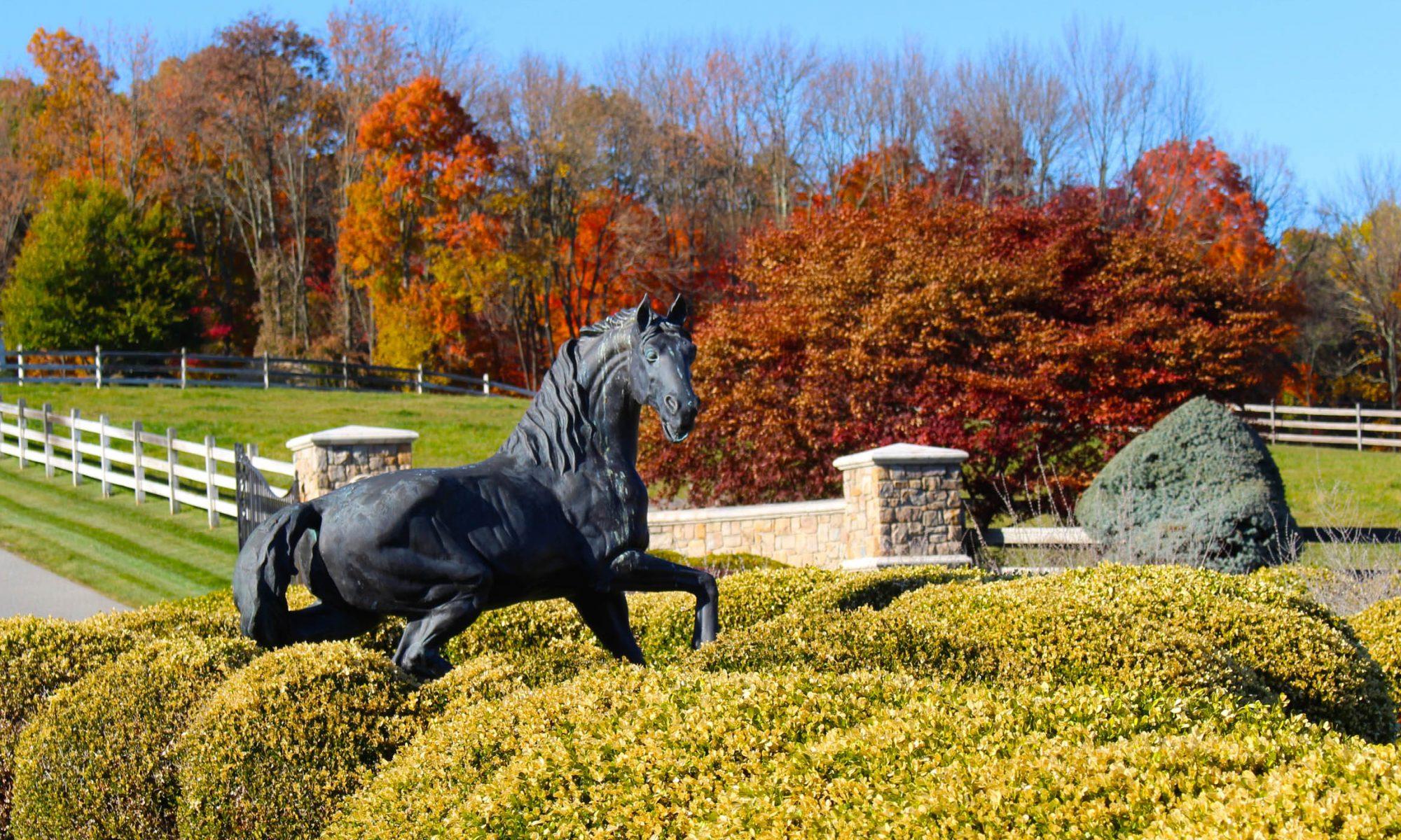 Equestrian Project - Desiree